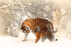 Животные 15