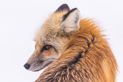 Животные 16