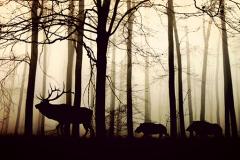 Животные 23