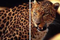 Животные-7