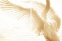 Птицы - 6