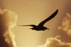 Птицы - 10