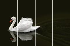 Птицы - 18